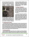 0000091892 Word Templates - Page 4