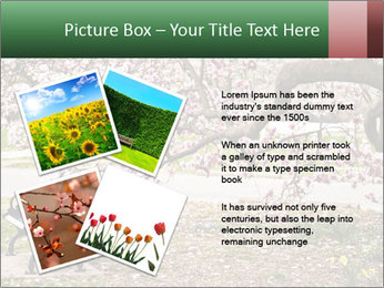 Park bench PowerPoint Templates - Slide 23