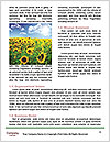 0000091895 Word Templates - Page 4