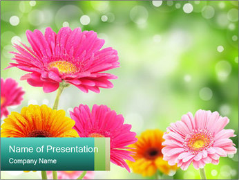 Colored flowers PowerPoint Template - Slide 1