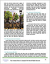 0000091900 Word Templates - Page 4