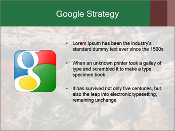 Camouflage PowerPoint Template - Slide 10
