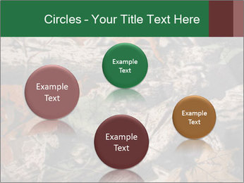 Camouflage PowerPoint Template - Slide 77