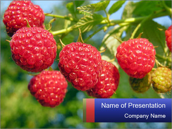 Raspberry PowerPoint Template