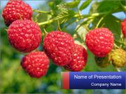 Raspberry PowerPoint Templates