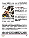 0000092039 Word Template - Page 4