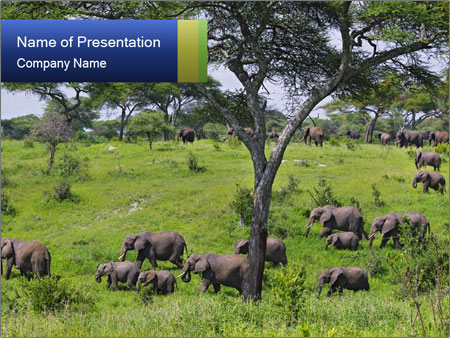National Park PowerPoint Template