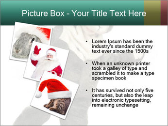 Funny grey rabbit PowerPoint Template - Slide 17
