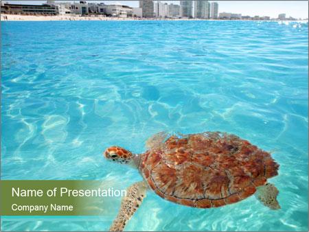 Green sea PowerPoint Templates
