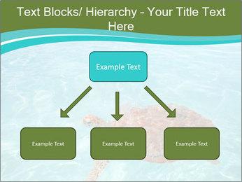 Green sea PowerPoint Templates - Slide 69