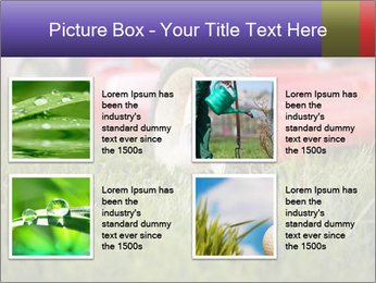The Grass PowerPoint Template - Slide 14