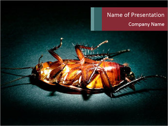 Cockroach extermination PowerPoint Template