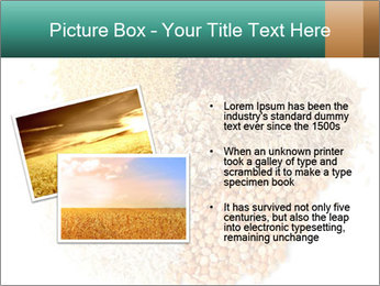 Different kinds of cereals PowerPoint Templates - Slide 20