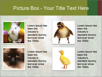 Guinea pig PowerPoint Template - Slide 14