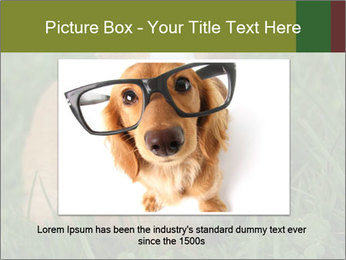 Guinea pig PowerPoint Template - Slide 16