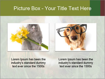 Guinea pig PowerPoint Template - Slide 18
