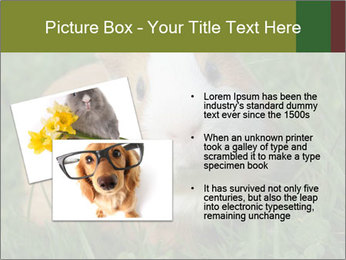 Guinea pig PowerPoint Template - Slide 20