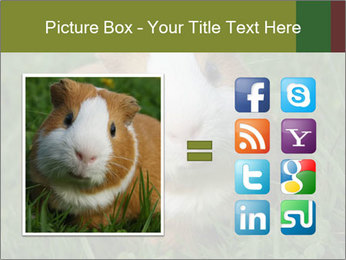 Guinea pig PowerPoint Template - Slide 21
