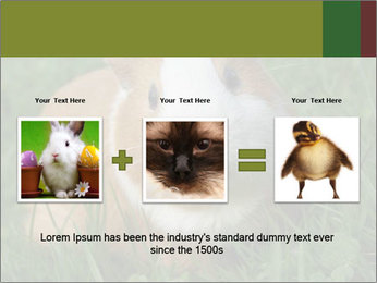 Guinea pig PowerPoint Template - Slide 22