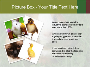 Guinea pig PowerPoint Template - Slide 23
