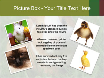 Guinea pig PowerPoint Template - Slide 24
