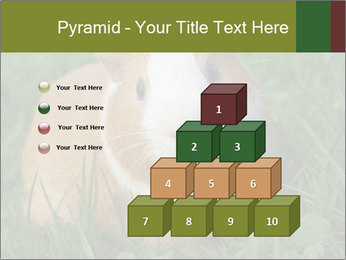 Guinea pig PowerPoint Template - Slide 31