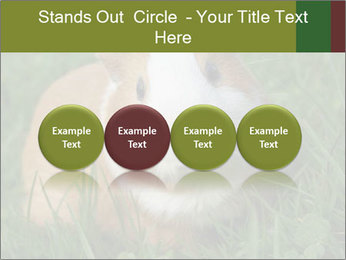 Guinea pig PowerPoint Template - Slide 76