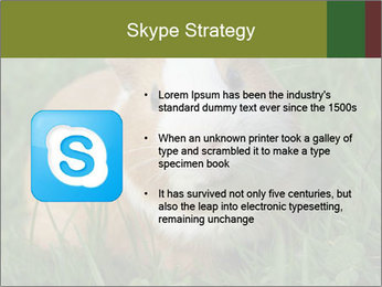 Guinea pig PowerPoint Template - Slide 8