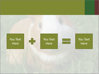 Guinea pig PowerPoint Template - Slide 95