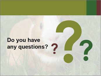 Guinea pig PowerPoint Template - Slide 96