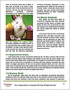 0000092095 Word Template - Page 4