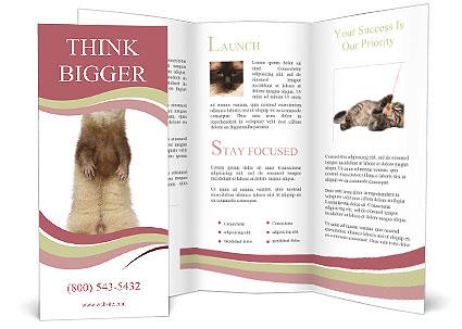 0000092101 Brochure Templates