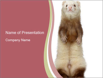 Ferret stands PowerPoint Template - Slide 1