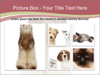 Ferret stands PowerPoint Template - Slide 19