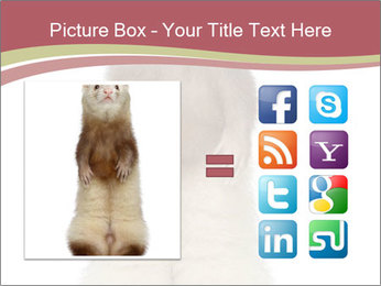 Ferret stands PowerPoint Templates - Slide 21