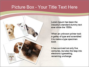 Ferret stands PowerPoint Templates - Slide 23
