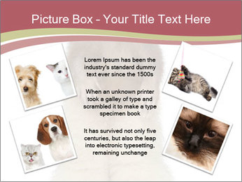 Ferret stands PowerPoint Template - Slide 24