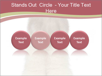Ferret stands PowerPoint Templates - Slide 76