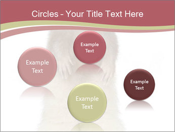 Ferret stands PowerPoint Templates - Slide 77