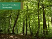 Dense forest PowerPoint Templates