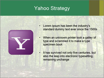 Dense forest PowerPoint Template - Slide 11