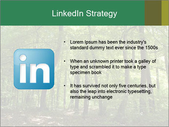 Dense forest PowerPoint Template - Slide 12