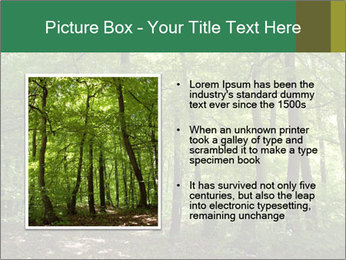 Dense forest PowerPoint Template - Slide 13
