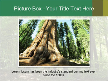 Dense forest PowerPoint Template - Slide 15
