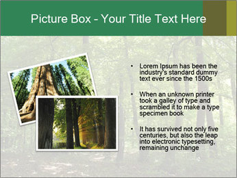 Dense forest PowerPoint Template - Slide 20
