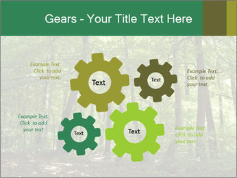 Dense forest PowerPoint Template - Slide 47