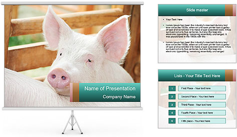 Young pig PowerPoint Template