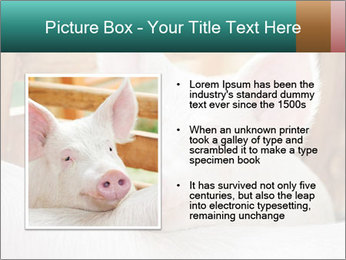 Young pig PowerPoint Template - Slide 13