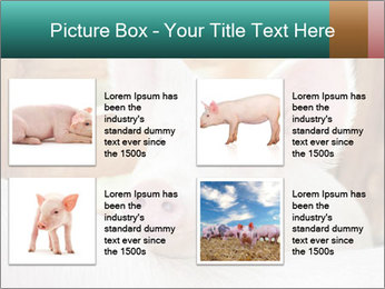 Young pig PowerPoint Template - Slide 14