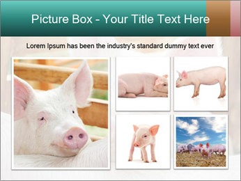 Young pig PowerPoint Template - Slide 19